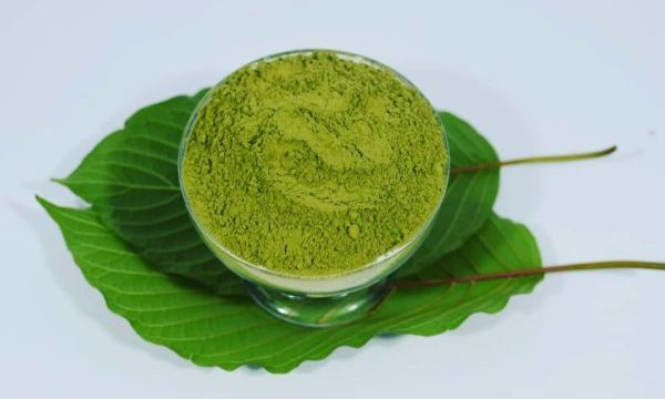 Green Borneo Kratom: A Strong Kratom Breed